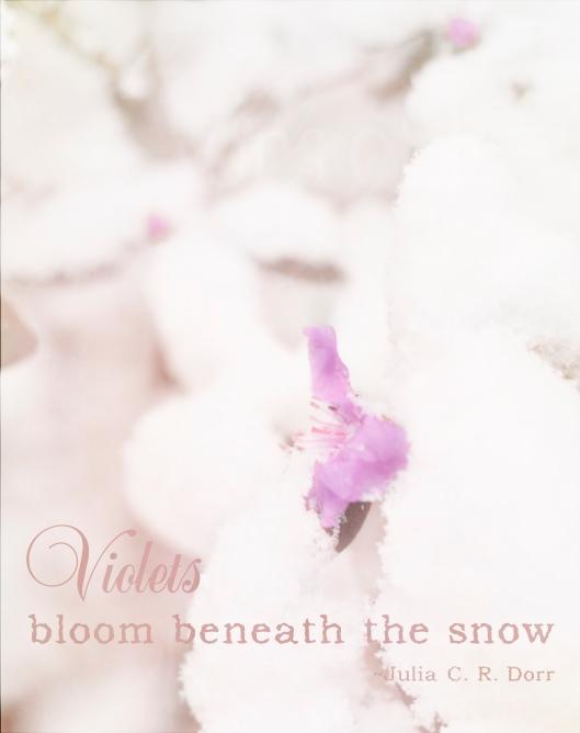 VioletsBloom